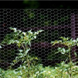 Rabbit Netting 1051 x 31 x 19g 50m