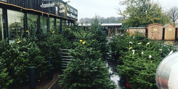 Real Christmas Trees Available Now at Torne Valley!