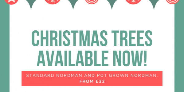 Real Christmas Trees available now across our stores!